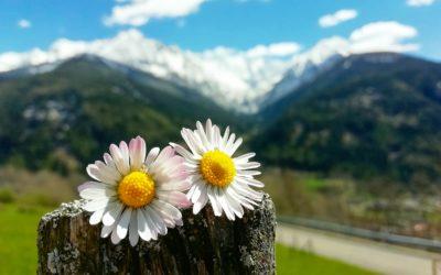 Esperienze di valore per il turista? La DMO le crea insieme agli operatori della Valle Camonica a partire da un ciclo di workshop e webinar